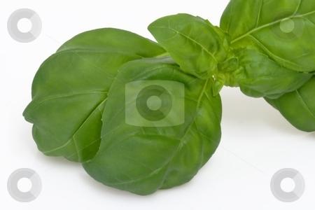 Fresh basil stock photo, Basil leaf in detail on bright backround by Birgit Reitz-Hofmann