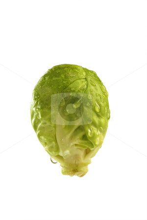 Brussel Sprout stock photo, Brussel Sprout in Detail on bright background by Birgit Reitz-Hofmann
