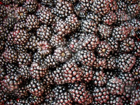 Blackberry background stock photo, Fresh blackberries as background. Shoot in studio by Birgit Reitz-Hofmann