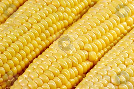 In detail stock photo, Corn crop in detail as background by Birgit Reitz-Hofmann