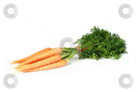 Fresh carrots stock photo, Fresh carrots on bright background by Birgit Reitz-Hofmann