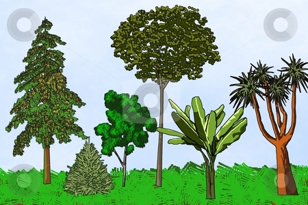 Various Trees stock photo, Six artistic trees from different parts of the world - a raster illustration. by Karen Carter