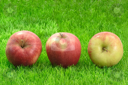Three Apples stock photo, Fresh red apples on green grass. Shot in Studio by Birgit Reitz-Hofmann