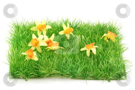 Grass meadow_2 stock photo, Decorative grass meadow on bright background by Birgit Reitz-Hofmann