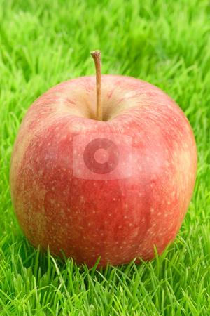Red apple_1 stock photo, Fresh red apple on green grass. Shot in Studio by Birgit Reitz-Hofmann