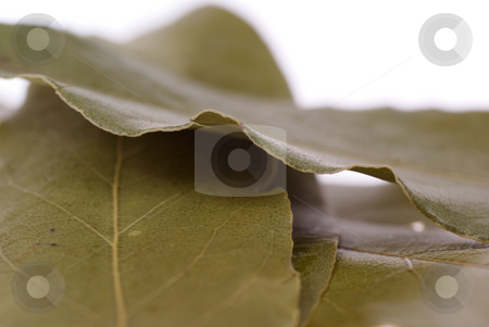 Laurel wreath stock photo, Arranged laurel wreath on white background by Jolanta Dabrowska