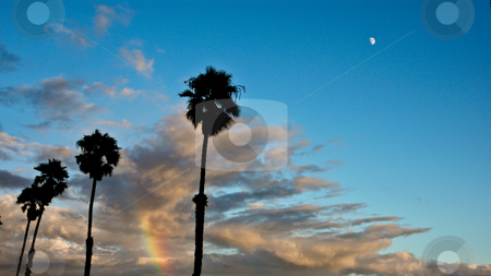 Palm Trees With Rainbow stock photo, Clouds with palm trees and a rainbow along the Santa Barbara CA coastline. by Bill Robbins