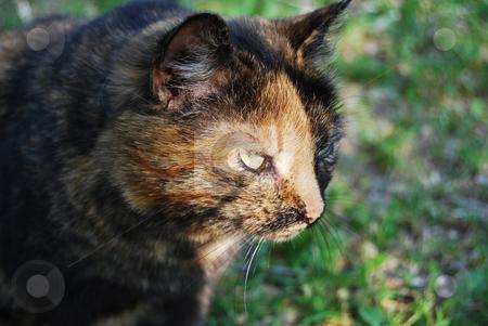 Cat stock photo, Cat hunting in the grass by Leyla Akhundova