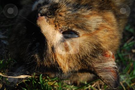 Cat stock photo, Cat relaxing on the grass by Leyla Akhundova
