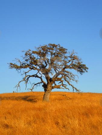 Single Tree stock photo,  by Michael Felix