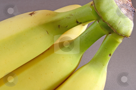 Banana stock photo, Bunch of bananas green end by Ira J Lyles Jr