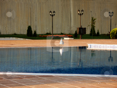 Lonely Bird stock photo,  by Kamen Atanassov