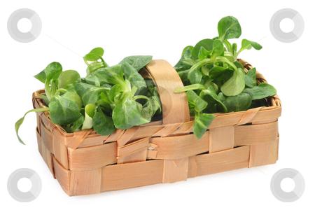 Field salad stock photo, Fresh corn salad in a basket on bright background by Birgit Reitz-Hofmann