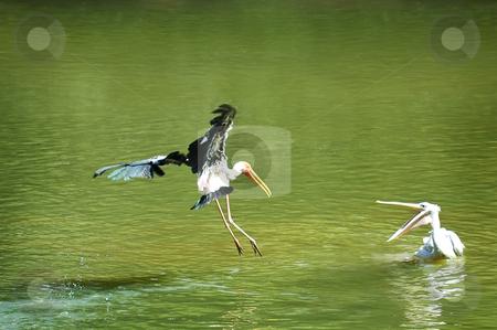 Bird stock photo,  by Norazshahir Razali