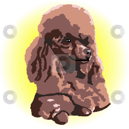 Chocolate Poodle Lying Down stock photo, A brown poodle relaxing lying down with a yellow color spot in the background - a raster illustration. by Karen Carter