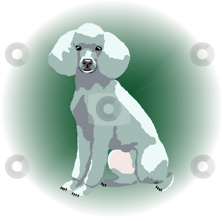 White Poodle Sitting Down stock photo, A white poodle sitting down with a green color spot in the background - a raster illustration. by Karen Carter