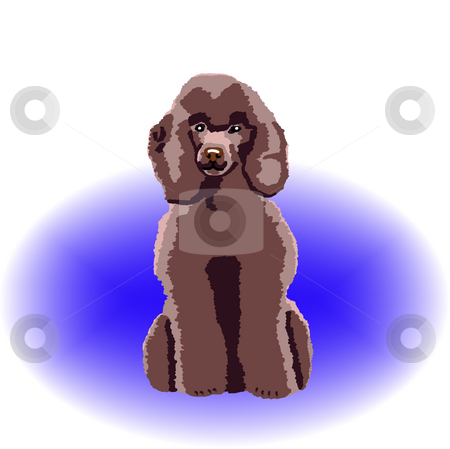Chocolate Poodle Sitting stock photo, A brown poodle sitting down with a blue color spot in the background - a raster illustration. by Karen Carter