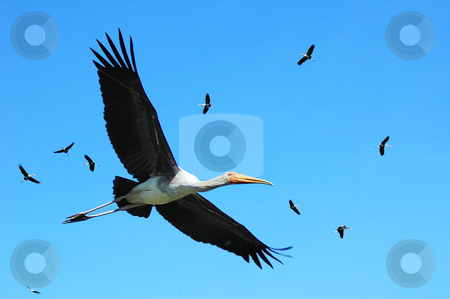 Birds stock photo,  by Norazshahir Razali