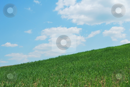 Sky And Grass stock photo, Background of blue sky and green grass by Tudor Antonel adrian