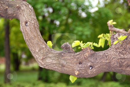 Tree branch stock photo, Curve tree branch green leaves natural floral background by Julija Sapic