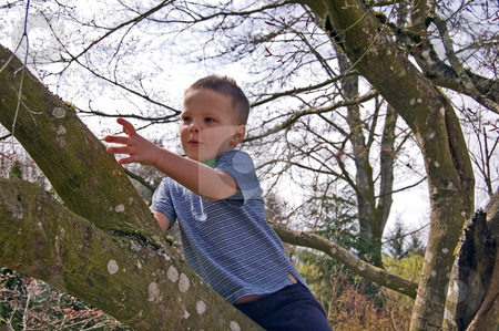 Little Boy Discovers Something in A Tree stock photo, Cute little boy has discovered something small as he's climbing his favorite tree. by Valerie Garner
