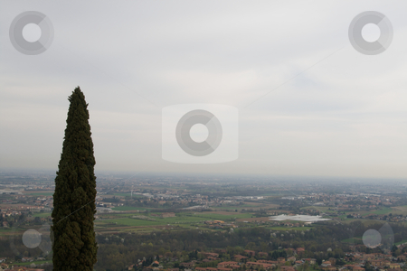 Lonely Cypress stock photo, Lonely Cypress by Creative Shield