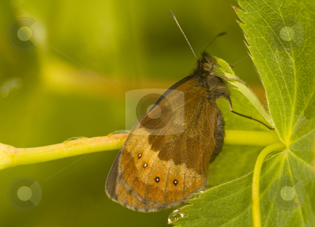 Butterfly stock photo, Close up on butterfly in the field by Kobby Dagan
