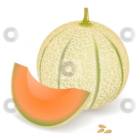 Melon stock vector clipart, A delicious melon, vector illustration by Laurent Renault
