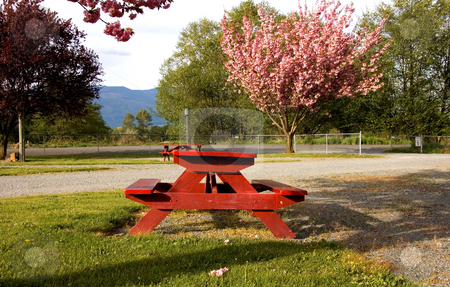 Red Picnic Table in Park stock photo, This is a red picnic table in a beautiful park with blooming trees and mountains in the background for gorgeous landscape. by Valerie Garner