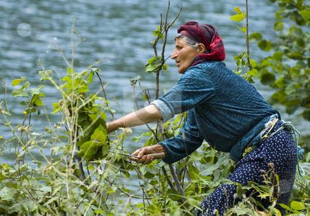 Turkish worker stock photo, Turkish woman working in the field by Kobby Dagan