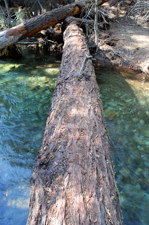Natural Bridge Crossing stock photo, A large fallen cedar tree spans a small river forming a foot bridge created by nature. by Lynn Bendickson