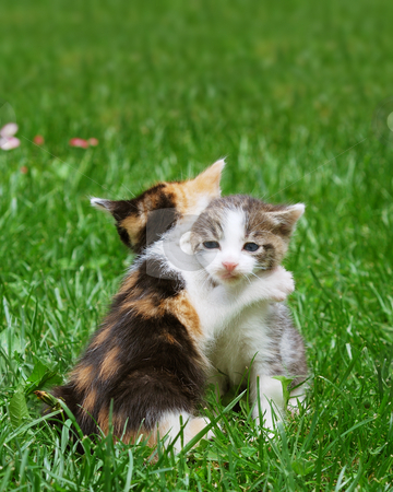 Kittens playing stock photo, Kittens playing in the grass catch in hug like pose. by Ivan Paunovic