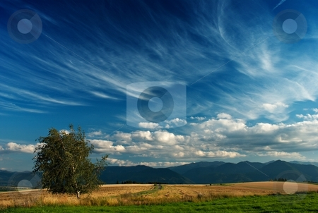 Summer meadows stock photo, Summer meadows with clods and tree by Juraj Kovacik
