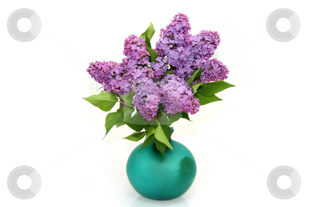 Purple lilac branch stock photo, Purple lilac branch on the vase on bright background by Birgit Reitz-Hofmann