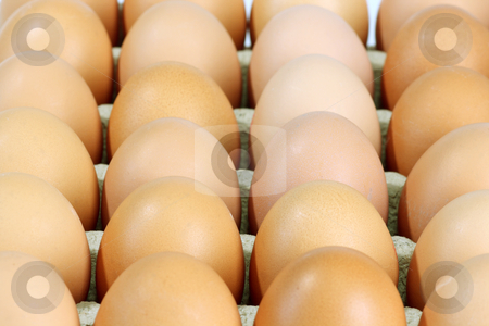 Brown eggs stock photo, Lot of brown eggs in a row on a tray by Birgit Reitz-Hofmann