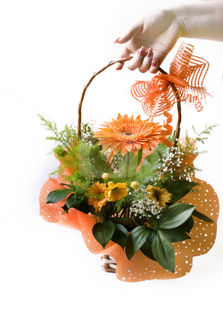 Gerbera stock photo, Hand giving orange gerbera bouquet in basket over white by Desislava Dimitrova