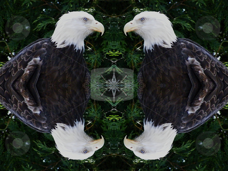 American Eagle - Background Pattern stock photo, American Eagle - Background Pattern by Dazz Lee Photography
