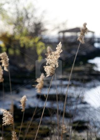 Swamp Grass with Gazebo stock photo, Swamp Grass with Gazebo by Terise Slotkin