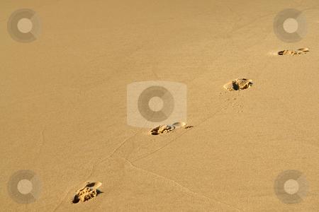 Fu?abdr?cke im Sand stock photo, Fu?abdr?cke im Sand by Wolfgang Heidasch