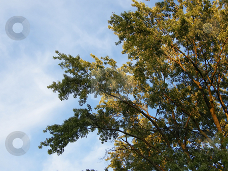 Tree Branches Touch the Sky stock photo, Tree Branches Touch the Sky on a beautiful sunny day. by Dazz Lee Photography