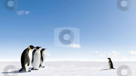Emperor Penguins meeting Adelie Penguin stock photo, Emperor Penguins meeting Adelie Penguin in Antarctica by Jan Martin Will