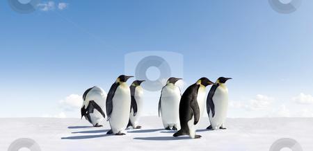 Emperor penguins stock photo, Emperor Penguins in Antarctica by Jan Martin Will