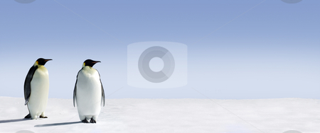 Penguin Panorama stock photo, Penguins standing in the snow with lots of copy space by Jan Martin Will