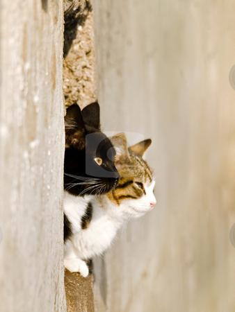 Cats stock photo, Two cats love outdoor in sunny day by Sergej Razvodovskij