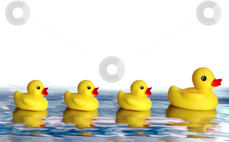 Family of ducks stock photo,  by Jan Martin Will