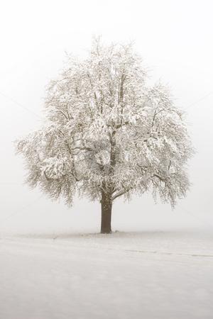 Foggy tree stock photo,  by Jan Martin Will