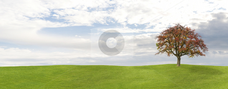 Fall Panorama stock photo, Apple tree on a meadow in Fall by Jan Martin Will