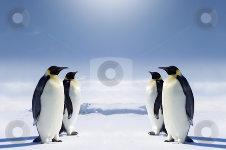 At the South pole stock photo, Two pairs of penguins facing each other at the South pole. by Jan Martin Will
