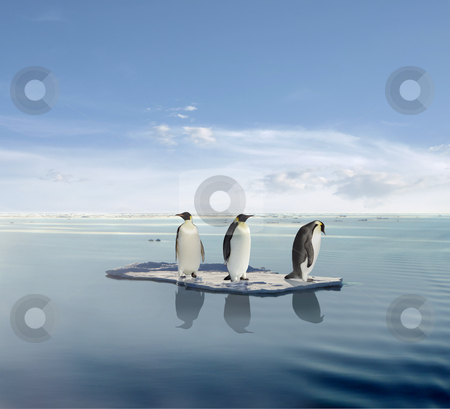 Pengions on icecap stock photo,  by Jan Martin Will