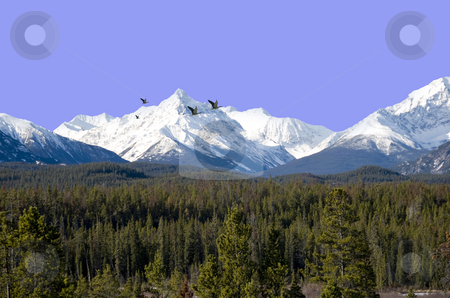 Coast mountains stock photo, Beautiful view on the coast mountain range canada bc by Wolfgang Zintl